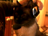 Video call snapshot 10.png