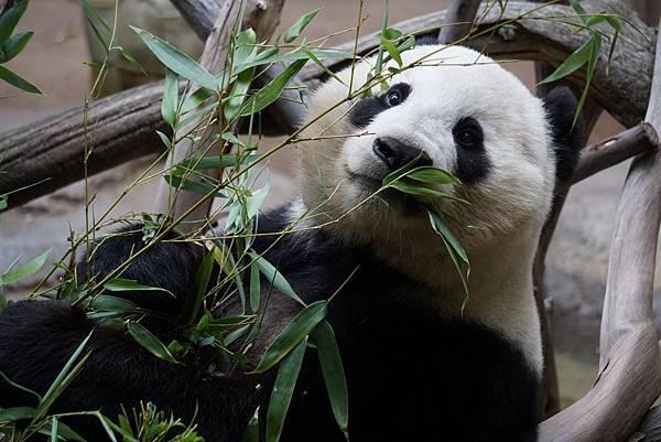 animal-bamboo-close-up-1123765.jpg