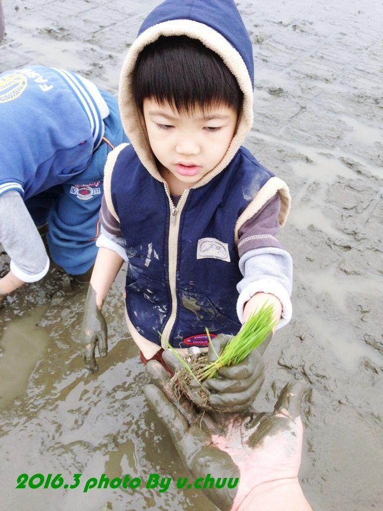 稻田_3824.jpg
