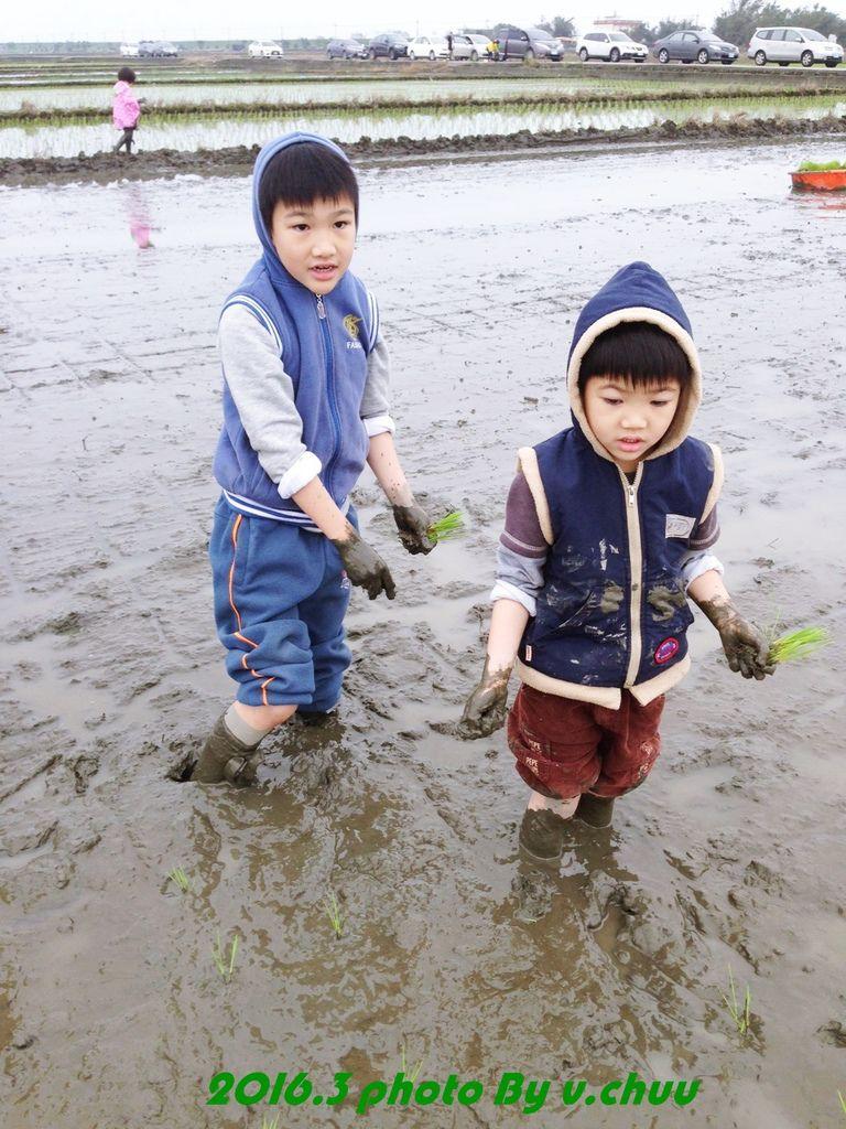 稻田_7052.jpg