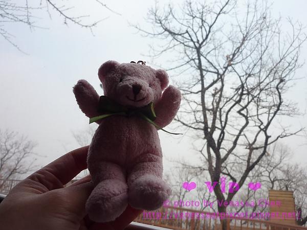 Teddy Bear 鑰匙圈 @ 南山公園。