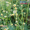 20120819.騎鐵馬_208