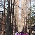 冬季戀歌著名的水杉林道。