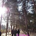 高聳的樹木列隊迎賓。