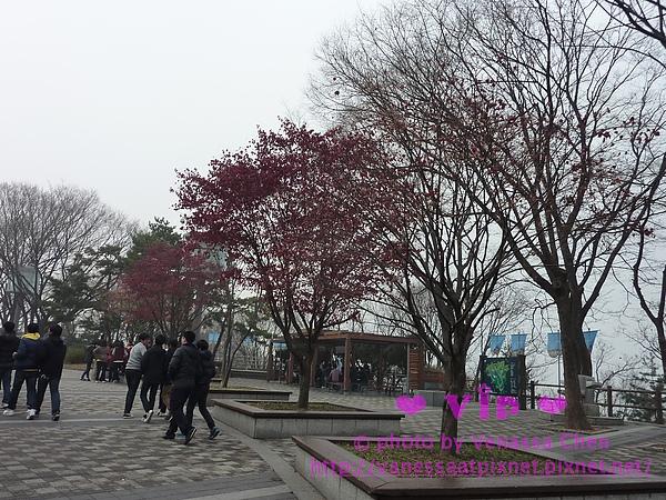 南山公園.남산공원。