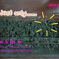 白蓳.發芽:埋了14顆種子,but 只有 ...... 1株嫩芽。