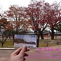 昌德宮的錦川,還有幾棵楓樹紅著等我們來。