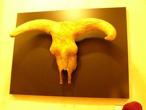 鬥牛的頭骨