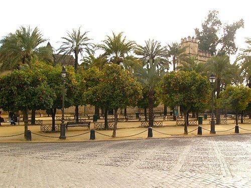 Cordoba街景 (如如一直想偷採的橘子樹)