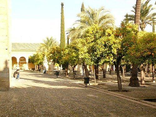 清真寺內的橘園