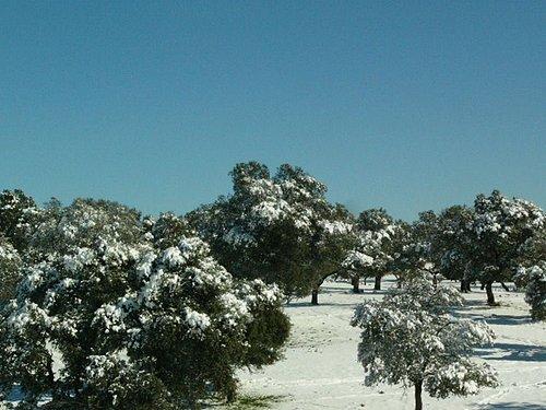 開往Toledo的路上,下雪了~