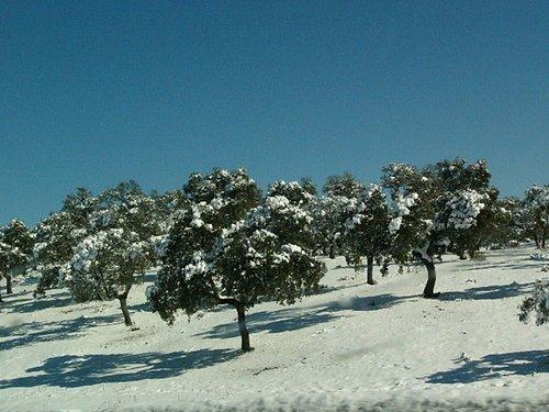 樹上有雪真美