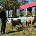 如如想餵羊