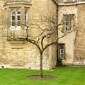 牛頓的蘋果樹