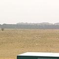 一大片的草原及野放的綿羊 (英國跟西班牙到處皆是喔)