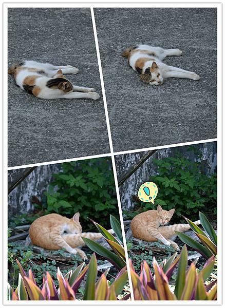 貓貓的反應好玩