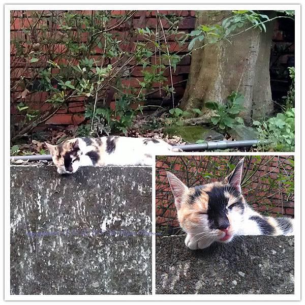 發現睡很熟的貓咪