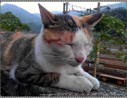 這時間是貓咪睡覺時間嗎?