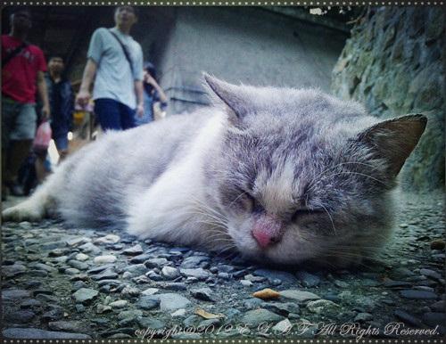 呃… 又發現睡貓了