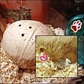 椰子屋+小鼠仔