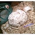 鼠媽蓋的鼠窩