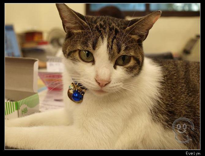 CAT6.jpg