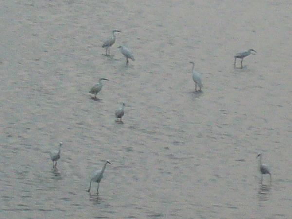 一群特殊的鳥類.JPG