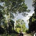 02菲律賓巴拉旺17山區.JPG