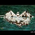 藍陽畫室展-杜秀良 01-06