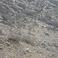 賀蘭山岩畫景區07