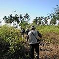 02菲律賓巴拉旺04紅樹林灘地.JPG