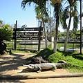 02菲律賓巴拉旺08鱷魚農場.JPG