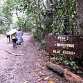 01菲律賓Mt Makiling16.JPG