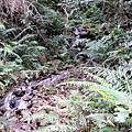 01Dalat 02Ta Nung Valley17.JPG
