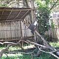 02菲律賓巴拉旺09鱷魚農場.JPG