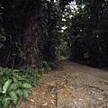 01菲律賓Mt Makiling12.JPG