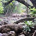02菲律賓巴拉旺102Balsahan Trail.JPG