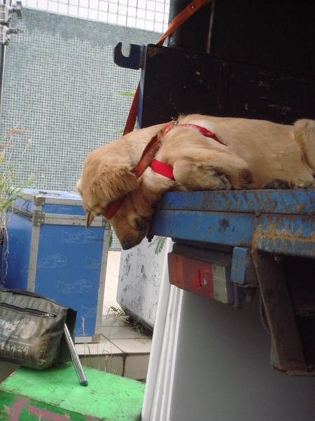 片場的狗寶貝.....小米