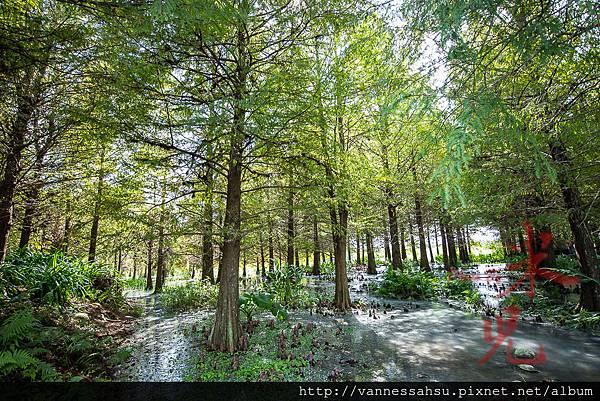 有熊的森林-19.jpg