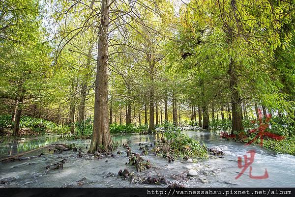 有熊的森林-21.jpg