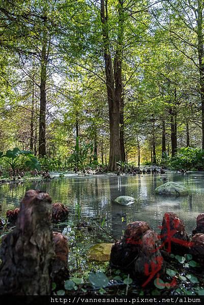 有熊的森林-27.jpg