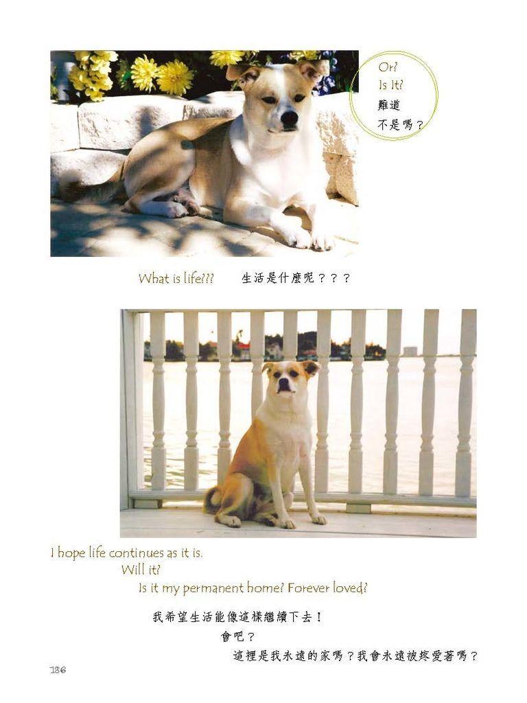 狗寶貝_頁面_205.jpg