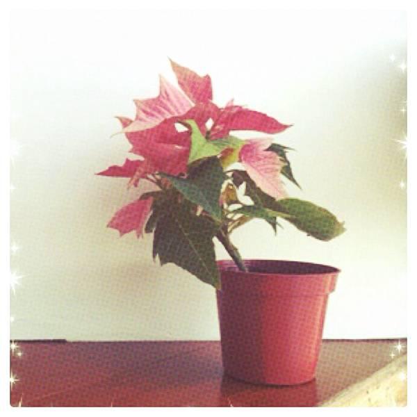 2011聖誕快樂.jpg