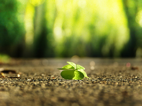 silviarita-four-leaf-clover-3336774_960_720.jpg