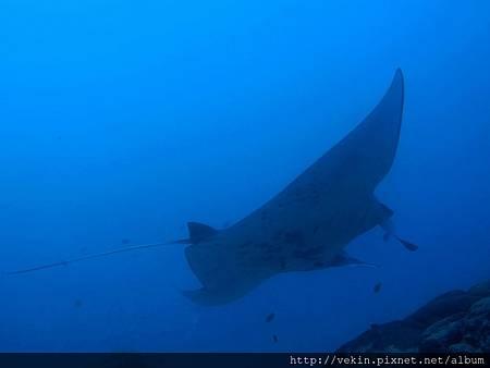 夢想的魚,讓我想學潛水的原動力~~