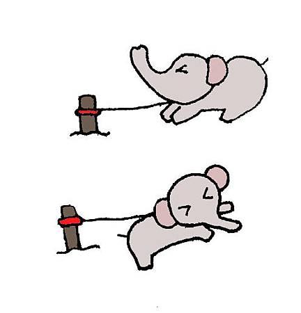 故事分享~《野生大象的調教》
