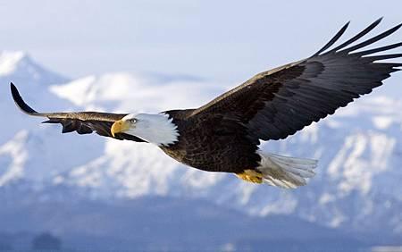【影片】蛻變 - 老鷹的故事 - 再生的雄鷹 - 老鷹的一生