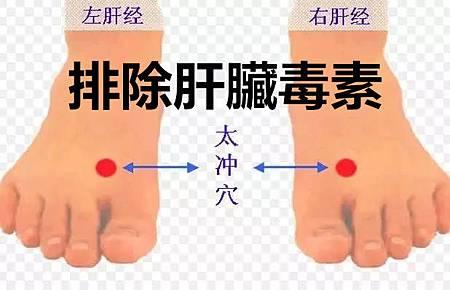 排除肝臟毒素