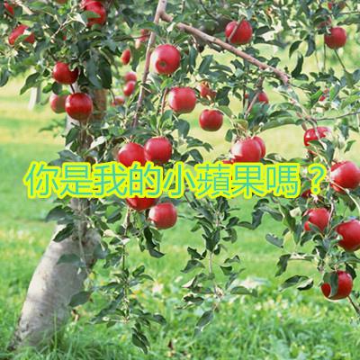 你是我的小蘋果嗎?