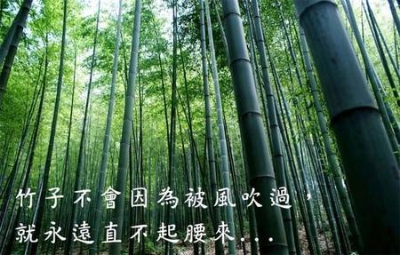 竹子不會因為被風吹過,就永遠直不起腰來